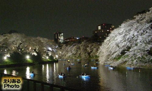 千鳥ヶ淵夜桜緑道ライトアップされた夜桜2013